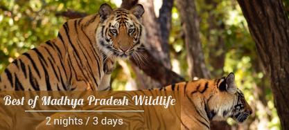 Madhya-pradesh-wildlife-packages