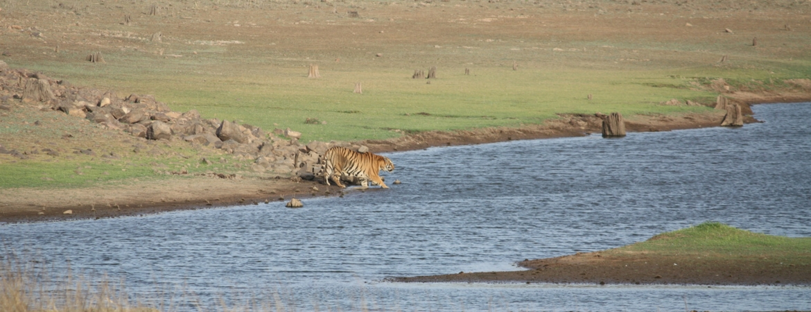 attractions of tadoba national park