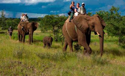 elephant safari in jim corbett
