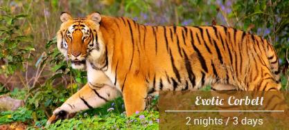 Exotic Wildlife Tour