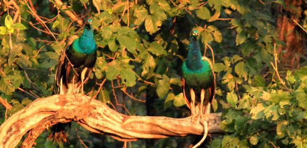 flora and fauna of tadoba national park