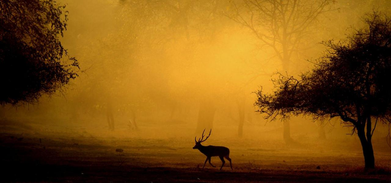 weather in kanha national park