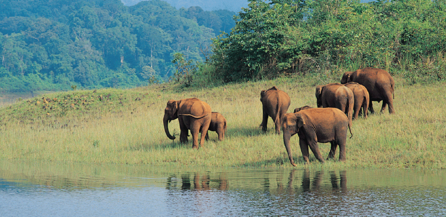Jim Corbett National Park Packages