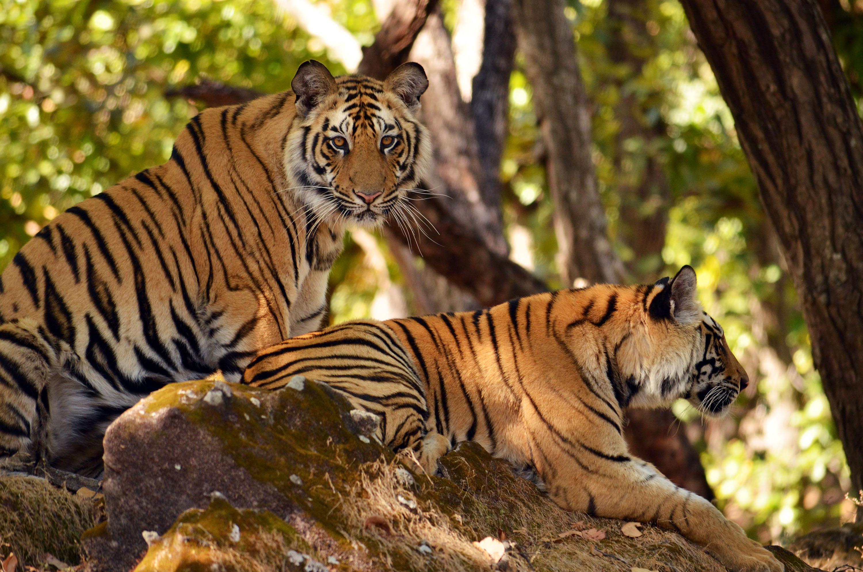 Bandhavgarh National Park - Among Top 5 National Parks in India