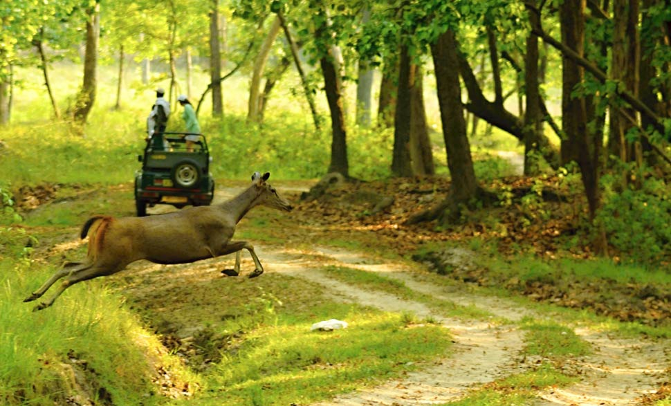 Kanha National Park - - Among Top 5 National Parks in India