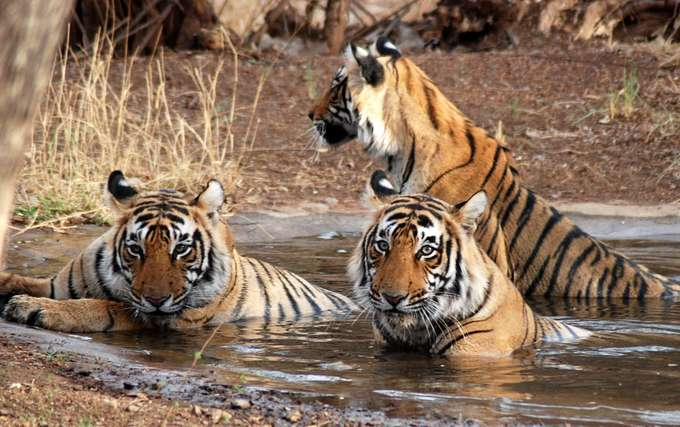 Corbett National Park - Among Top 5 National Parks in India