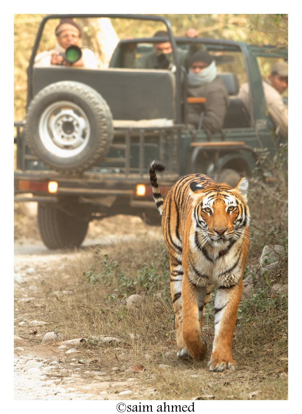 Best time for Tiger Sighting in jim corbett national park