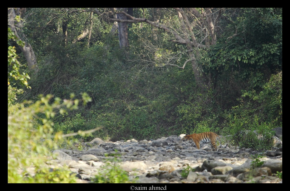 wildlife safari in jim corbett national park
