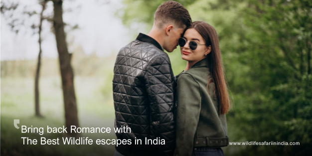 Bring back Romance with The Best Wildlife Escapes in India