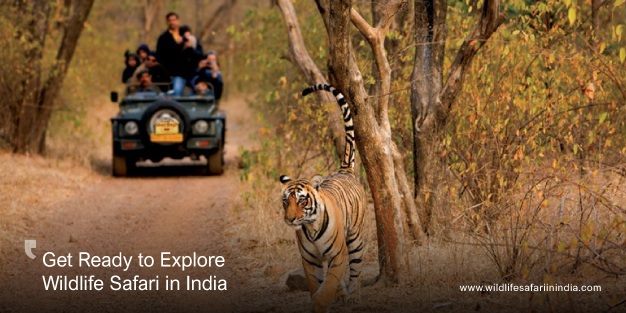 Get Ready to Explore Wildlife Safari in India