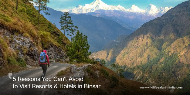 5 Reasons You Can't Avoid to Visit Resorts & Hotels in Binsar