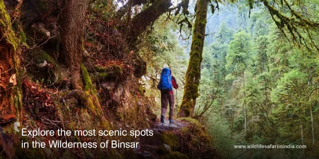 Explore the most scenic spots in the Kumaon Himalayas in the Wilderness of Binsar
