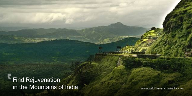 Find Rejuvenation in the Mountains of India