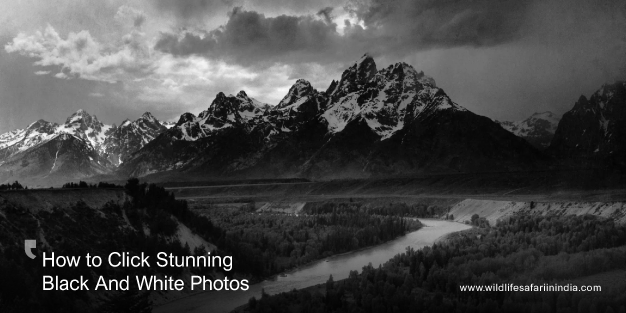 How to Click Stunning Black And White Photos