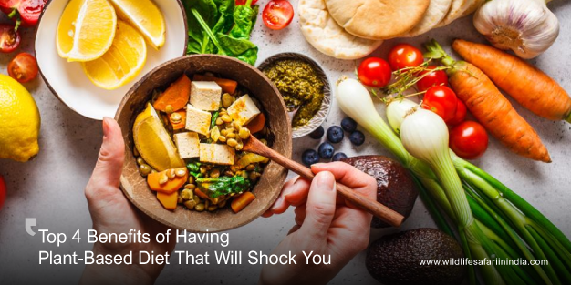 Top 4 Benefits of Having Plant-Based Diet That Will Shock You